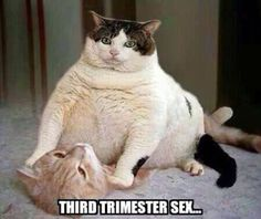 Funny Third Trimester Pregnancy Memes and Jokes for those days you feel like you just can't handle being pregnant anymore and need a laugh. Funny Pregnancy Memes, Pregnancy Quotes, Funny Cat Memes, Hilarious, Baby Pregnancy, Baby Quotes, Funny Quotes, Trimesters Of Pregnancy, Fat Cats