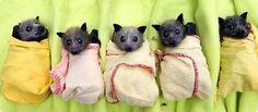 Baby bats ♥ ♥ (^◎^)