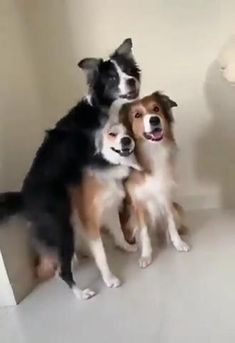 Cute Baby Dogs, Cute Funny Dogs, Cute Funny Animals, Cute Puppies, Cute Cats, Cute Animal Videos, Cute Animal Pictures, Funny Dog Videos, Pet Videos