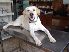 Euthanasia Bias and Treatment of Cancer in Pets | petMD