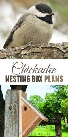Small Woodworking Ideas How to make a nesting box for chickadees. Woodworking Ideas How to make a nesting box for chickadees. Bird House Feeder, Bird Feeders, Bird Feeder Plans, Bird House Kits, Bird House Plans Free, Bird Houses Diy, Bird Aviary, Bird Boxes, How To Attract Birds