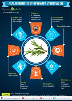 Health Benefits of Rosemary Essential Oil | Organic Facts