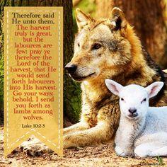 Bible Verses Kjv, Kangaroo, Pray, Fox, Sayings, Animals, Follow Us On Twitter, Author, Baby Bjorn
