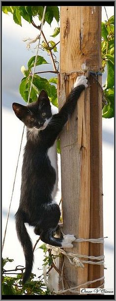Hang on Kitty...  #photo by jevigar Pinned by: www.spinstersguide.com