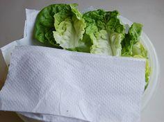 Como conservar alface na geladeira e aumentar a vida útil