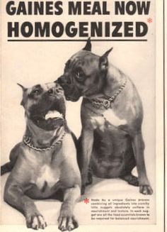 1941 Gaines meal Dog Food print ad Two Boxer dogs by Vividiom, $7.00
