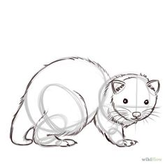 Outline Step 7 how to draw ferret