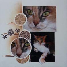 maya le chat ...par eolia eolia (gabarit photo unique)
