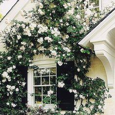 L'eleganza del bianco#myinspiration #instagarden #instagardenlovers #rose #roses #fiori #fleurs #flowers #gardens #giardini #jardins #landscape #progetti #chic #blooms #nature #myidea #mystyle #myflowers #marinacanazzad # by marinacanazzadesigner