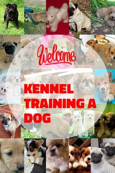 Top Tips For Proper Kennel Training A Dog *** More info could be found at the image url. Kennel Training A Dog, Crate Training, Dog Training Tips, Stress And Anxiety, Have Fun, Image Link, Advice, Puppies, Pets