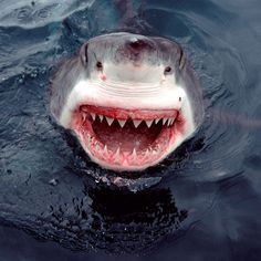 A ferocious great white shark looks like it is having a laugh as it smiles for the camera.  Photographer Mike Parry was standing just 5ft away from the powerful predator when it broke through the water near his small fishing boat near Dyer Island, Cape Province, South Africa. He said: 'No one on the boat could believe that I was lucky enough to catch the exact moment. It takes a lot of waiting and patience for that one lucky shot.'