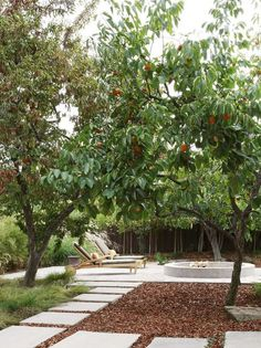 Backyard Garden With Fuyu Persimmon Tree : Growing Fuyu Persimmon Trees Fruit Tree Garden, Garden Trees, Fruit Trees, Fruit Fruit, Fuyu Persimmon Tree, Landscape Design, Garden Design, Patio Design, Backyard Designs