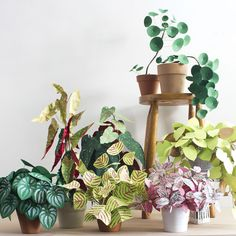 Paper plants - The Apple of my DIY, Corrie Beth Hogg