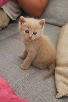 adorable kitten #cat