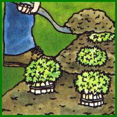 Frischer Salat Im Winter Aus Eigenem Anbau. Ohne Eigenen Garten ... Frische Salate Eigenen Garten Ernten