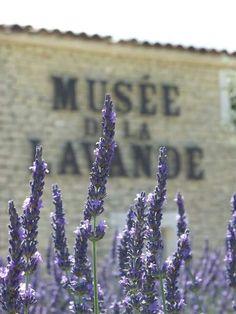 Musée de la Lavande, France Lavender Cottage, Lavender Garden, Lavender Blue, Lavender Fields, Lavender Flowers, Perfume, Lavander, French Country Style, Purple Haze