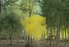 """Filippo Menielli takes beautiful landscapes and ignites smoke bombs for his photography. """"Giving silence a physical shape to be aware of its presence in the age of information and communication technology. The result proves that beauty can be found in clashing visions with an approach and aesthetic similar to romanticism."""""""