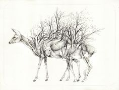 """Italian artist Nunzio Paci works with pencil and oil paints to create strange amalgamations of plants and animals in what he describes as an intent to """"explore the infinite possibilities of life, in search of a balance between reality and imagination."""" Paci currently has a solo show including severa"""