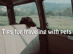 5 Useful Tips for Traveling with Pets