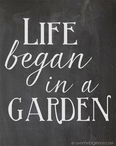 Life began in a garden. #Quotes #ProvenWinners #Gardening. Repinned by www.claudiadeyongdesigns.com and at www.thegardenspot.co.uk