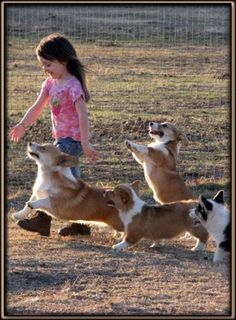 Corgis love kids!!