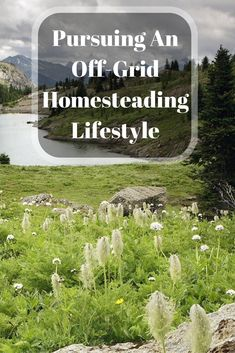 """On today's podcast episode I chat with Tanya Morrison, she is a homesteader in Alberta Canada pursuing a journey """"back"""" to off-grid living while taking advantage of modern technol…"""
