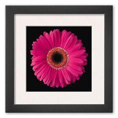 Art.com Gerbera Daisy Pink Framed Art Print By Jim Christensen, Multicolor