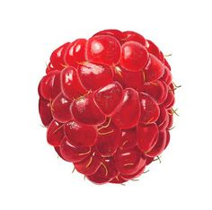 Anna Mason - Works for Sale - Art Amatoria Watercolor Fruit, Watercolor Paintings, Flower Paintings, Watercolours, Botanical Drawings, Botanical Prints, Juan Sanchez Cotan, Draw Tutorial, Anna Mason