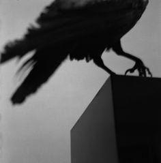 Alberto Garcia-Alix - Monologue avec un corbeau, 2011 Vaporwave, Garcia Alix, Alberto Garcia, Qrow Branwen, Kaz Brekker, Yennefer Of Vengerberg, Concours Photo, Flesh And Blood, Itachi Uchiha