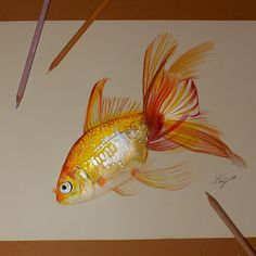 Color Pencil Drawing Wonderful gold fish drawing by Fish Drawings, Animal Drawings, Pencil Drawings, Art Drawings, Colored Pencil Artwork, Color Pencil Art, Colored Pencils, Caran D'ache, Fish Art