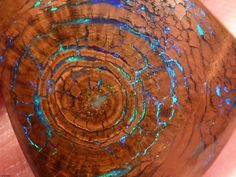 "Rare Opalized Wood: ""Petrified wood is basically fossilized wood that has had its organic matter replaced by a mineral such as agate, bit by bit, as it decomposes. The wood structure is maintained, but the wood fibers are slowly changed into stone. Sometimes a jasper, quartz, pyrite or even opal(shown above) can be found fossilized in wood."""