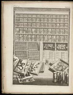 Cabinet of Wonders.  (anticipatedstranger)