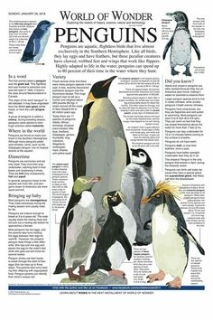 World of Wonder by Laurie Triefeldt Beautiful Arabic Words, Beautiful Birds, World History Facts, Penguin Art, Todays Comics, English Phrases, Animal Facts, Cute Penguins, Marine Biology
