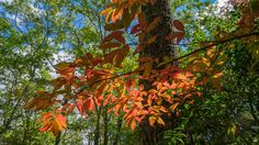 This is a two-part hike with a short drive on a forest service road in between. Both the Case Camp Ridge Trail and the North Face Trail start on Forest Road 475B in Pisgah National Forest. The first…