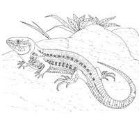 Echsen, Warane und Leguane [15] - Mellvil, ein Kinderforum zum Klarkommen   Labbé Verlag
