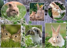 Rabbit, Collages, Animals, Bunny, Rabbits, Animales, Animaux, Bunnies, Animal
