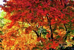 #Painted #Autumn by #Kaye_Menner #Photography Quality Prints Cards Products at: http://kaye-menner.pixels.com/featured/painted-autumn-by-kaye-menner-kaye-menner.html