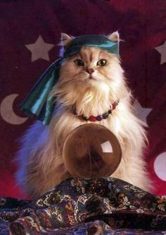 Is Your Cat Psychic?
