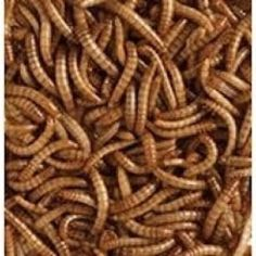 Wild Bird Food Dried Mealworms Hedgehogs Pet Reptiles Koi Fish Chicken Feed 2kgs #Unbranded