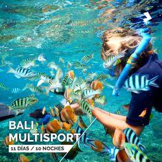 Bali - Snorkel