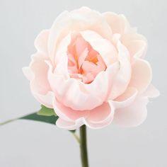 "Real Touch Peony in Pink with Cream Accents<br>4.25-4.5"" Bloom x 20"" Tall"