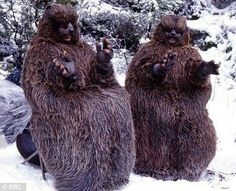 The British version of the lion the Witch  and the wardrobe  beavers! Creepy right?!!!!