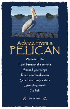 "Advice from a Pelican: ""Wade into life."" Your True Nature"
