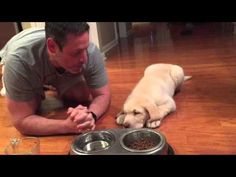 Puppy Prays Before Eating! - Blogs - KVOX-FM - Today's Froggy 99.9 - Fargo-Moorhead's #1 For New Country    For more awesome videos → http://gwyl.io/