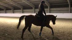 Araberhoppe født 2008 ønsker hestepasser.   FINN.no Horses, Animals, Dressage, Animales, Animaux, Animais, Horse, Words, Animal