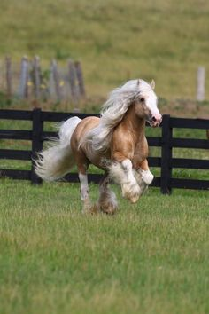 Palomino Gypsy. this looks like honey pie pony off of strawberry shortcake! want her!!!