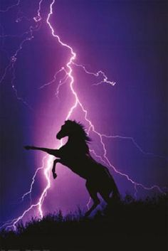 Stunning……WHITE LIGHTENING ON A PURPLE SKY OUTLINING A BEAUTIFUL BLACK HORSE………ELECTRIFYING………ccl