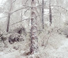 In the woods by Peter Zeglis, via Behance
