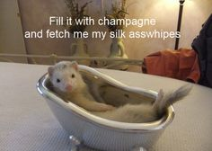 ferret in bath fill champagne & fetch silk asswhipes