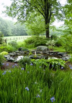 Giving a natural pond context Garden Pond, Water Garden, Shade Garden, Garden Paths, Pond Landscaping, Ponds Backyard, Amazing Gardens, Beautiful Gardens, Landscape Design